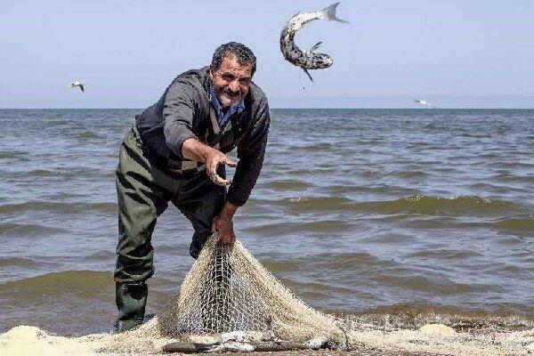 صید ماهیان استخوانی گیلان توسط 4 هزار صیاد پره